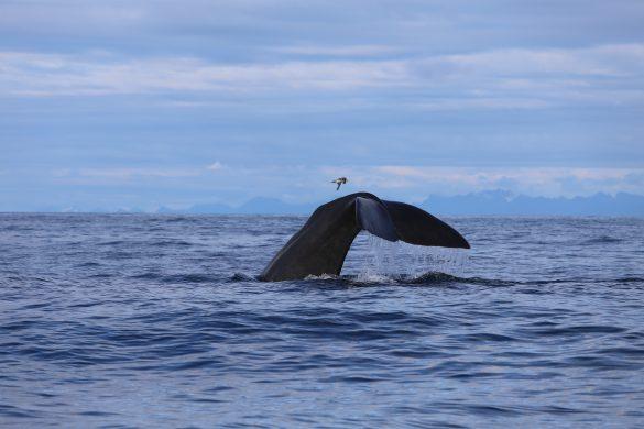 Steffi Schroeter, Die Weisheit der Wale